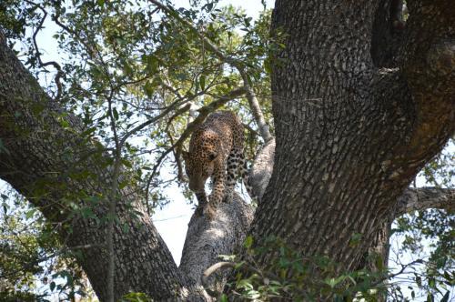 Yala Leopard Paradise Safari