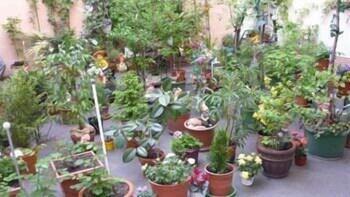 Flex Appartements (فلکس آپارتمنتس) Garden