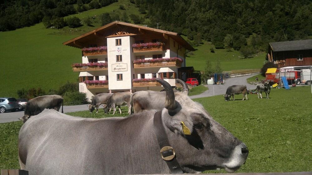 Gallery image of Alfaierhof Bergheimat