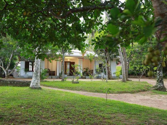 Ceylon Olive Galle