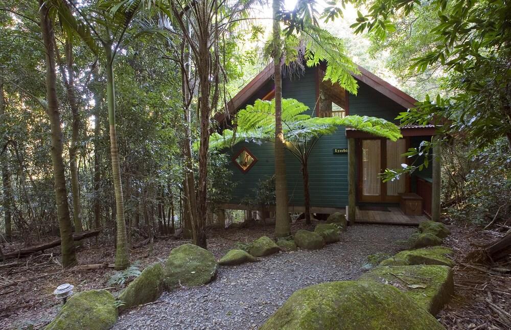 Springbrook Lyrebird Retreat