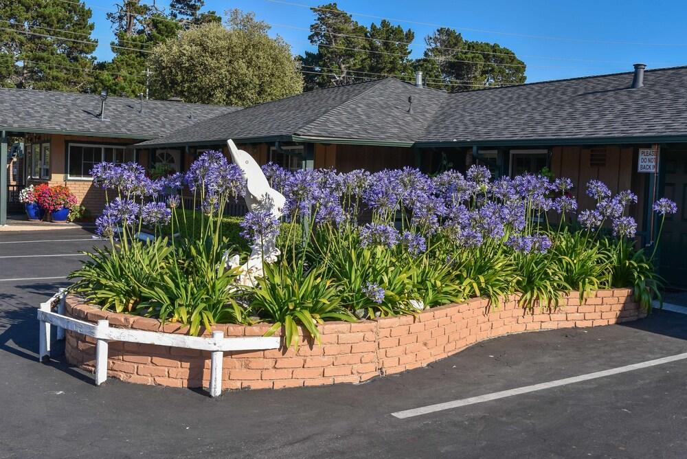 Gallery image of Padre Oaks