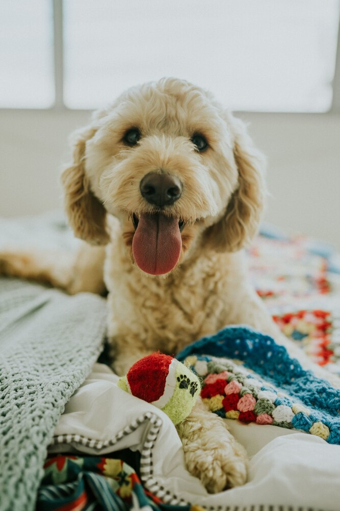 Gallery image of Buccaneer Motel Pet friendly