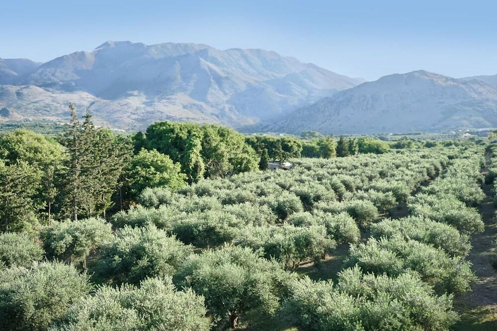 Gallery image of Vardis Olive Garden