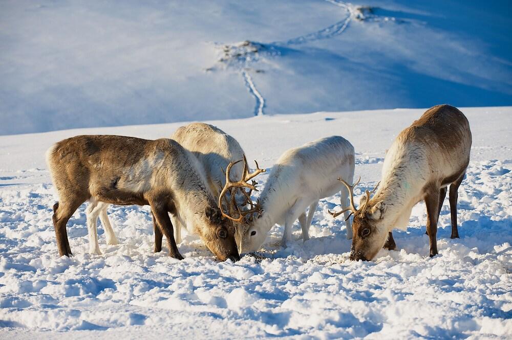 Gallery image of Smarthotel Tromso
