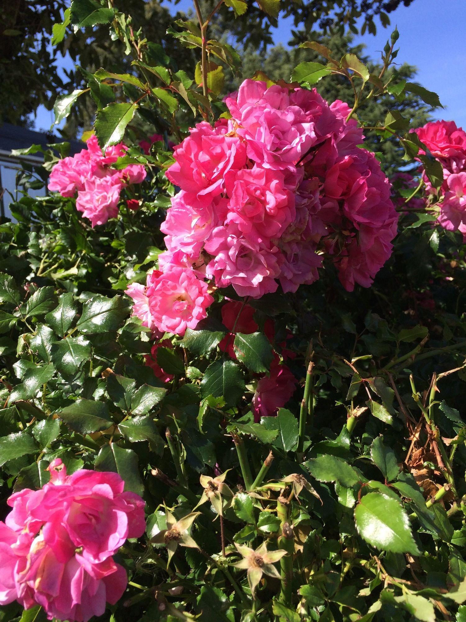Water Lily Garden B&B