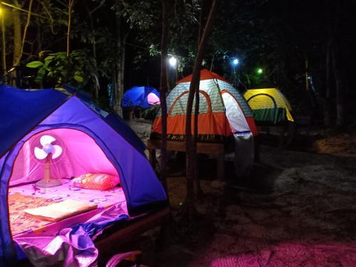 Sweet Jungle Tents