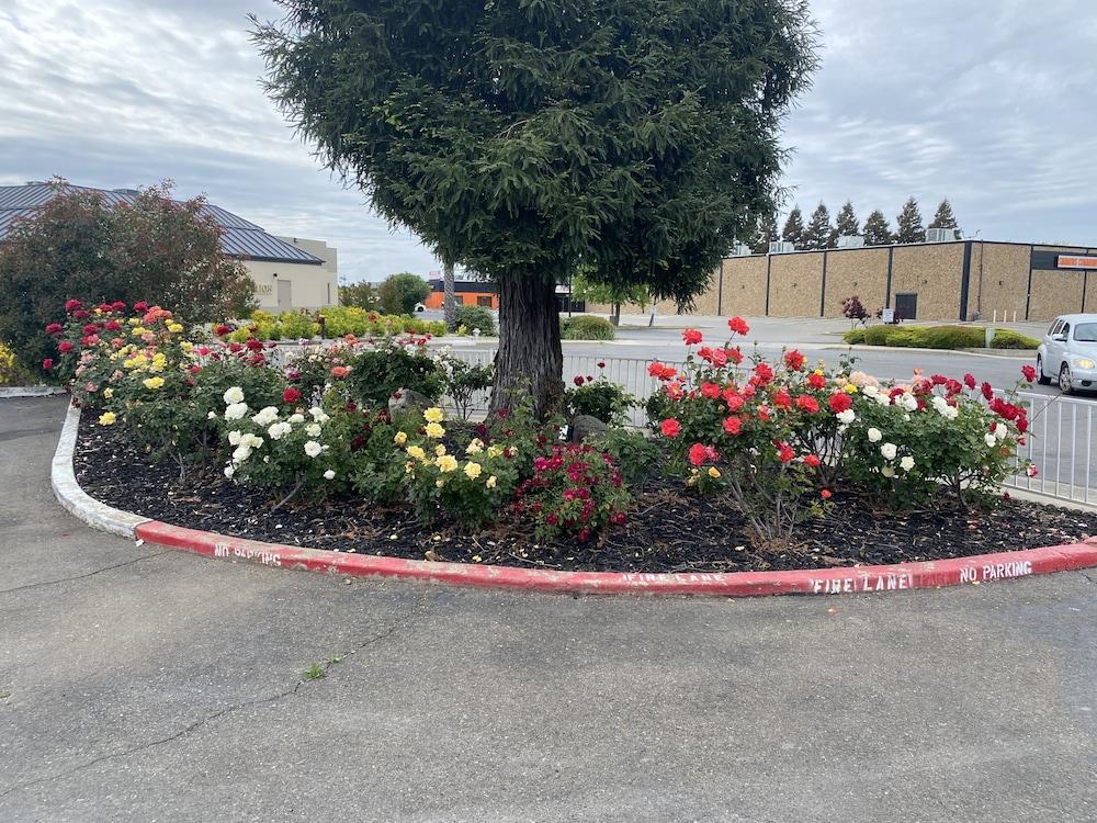 Gallery image of Oasis Inn Sacramento Elk Grove