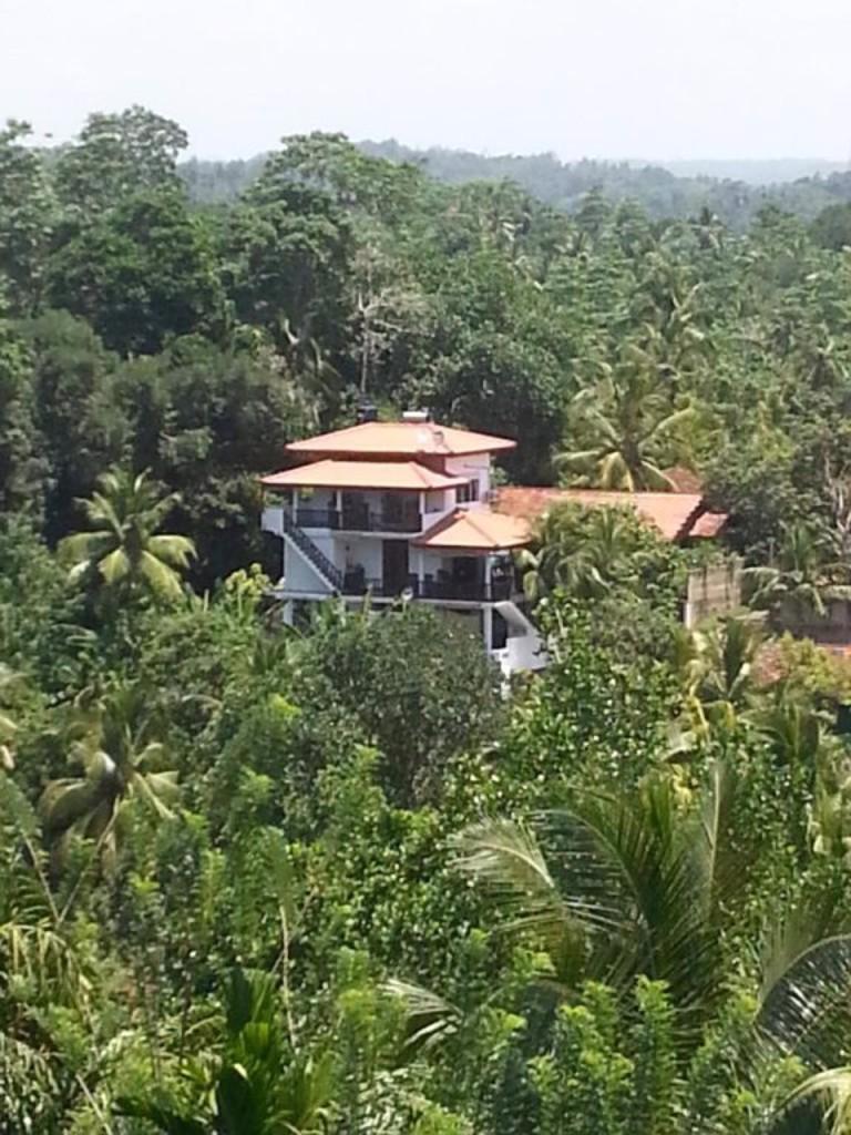Villa Jungle Paradise