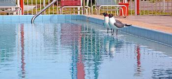 Gallery image of Westmont Inn Clearwater Beach FL