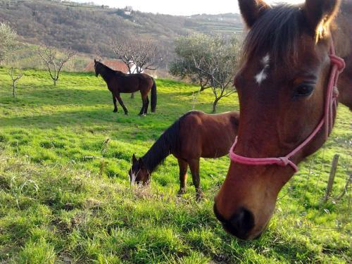 Na kmetiji s konji Pogelsek